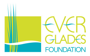 The Everglades Foundation