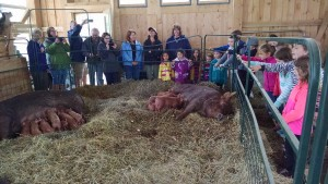 first grade class and sows piglets tour
